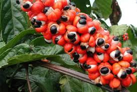 Guarana je nadomestek za kavo!