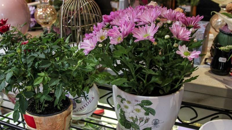Kakšno posodo za cvetje je najbolje izbrati